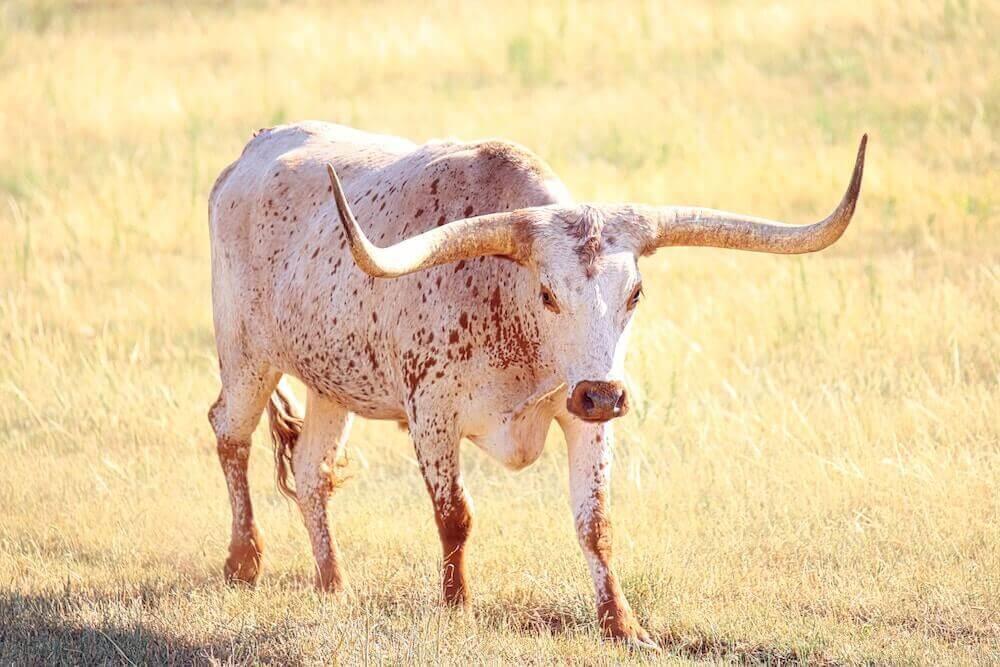 Texans Betting